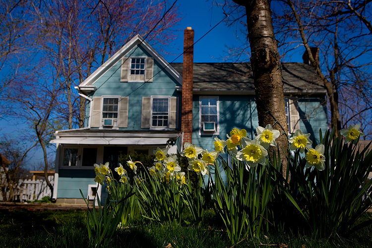 Yellow Flowers, Blue House, Blue Sky : Oxford : MD