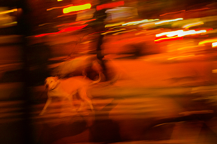 Dog Blur : 9th Av 23rd St : NYC