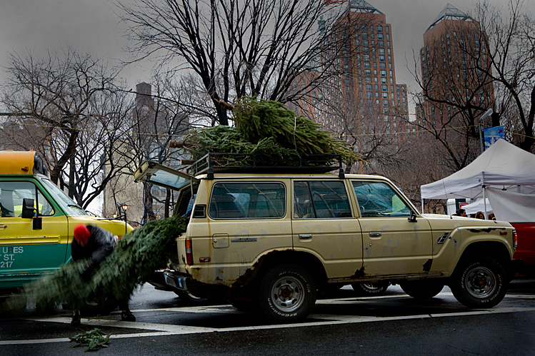 Christmas Tree Shopping : Union Sq : NYC