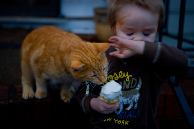 Ice Cream and Cat Flu : West Virginia : USA