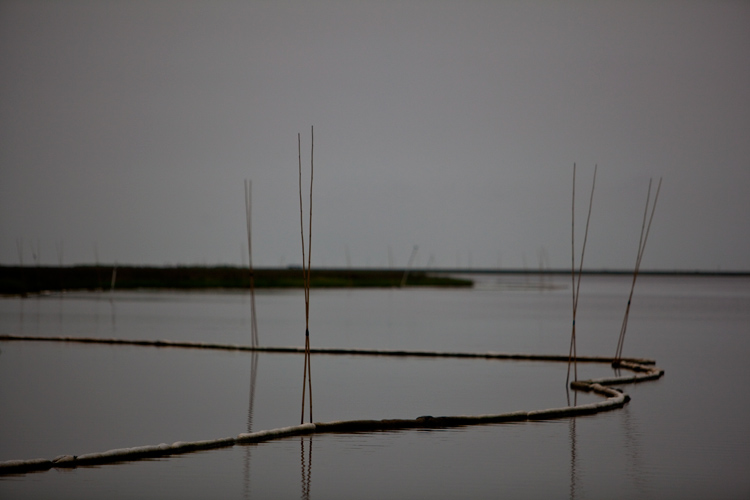 Oil Booms in the Marshes : Bay Jimmy : Louisiana