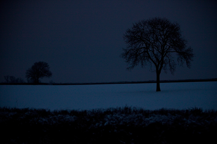 Trees in Snow on The Winter Solstice : Warwickshire : UK