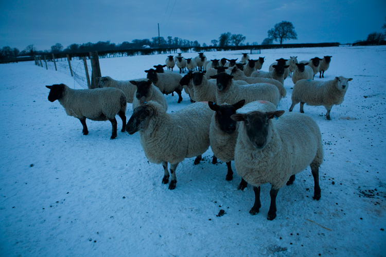Blue Sheep : Jezblog Holiday Competition : UK