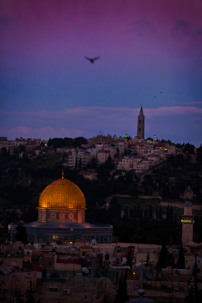 Bird over Jerusalem : Old City : Israel