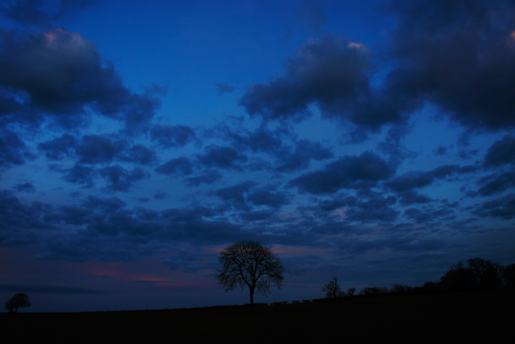 Single Tree on Final Day of the Year : Warwickshire : England
