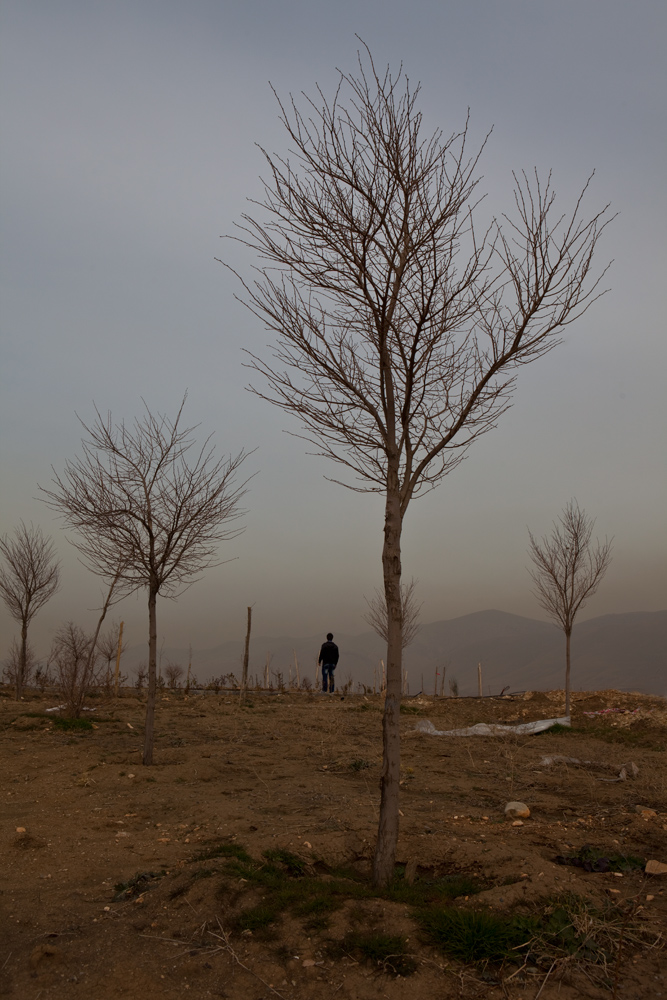 New Trees for Kurdistan : Suliemania : Iraq
