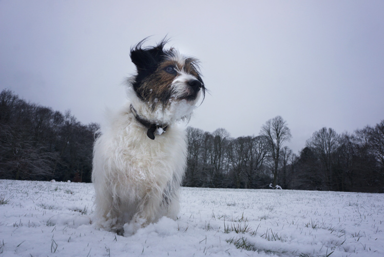 Ringo in the Snow : Hampstead Heath : London