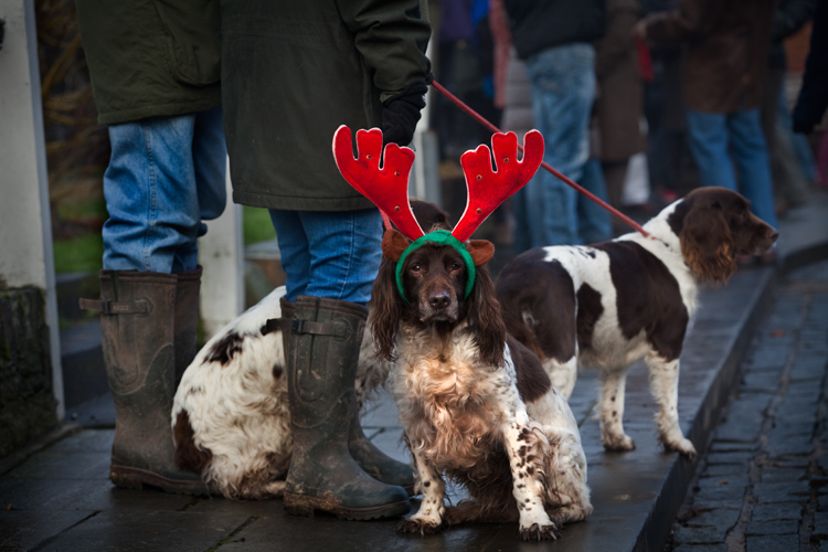 Reindeer Dog : Ludlow : UK