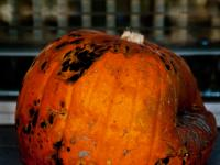 Doorstep Pumpkin of Death : London : UK