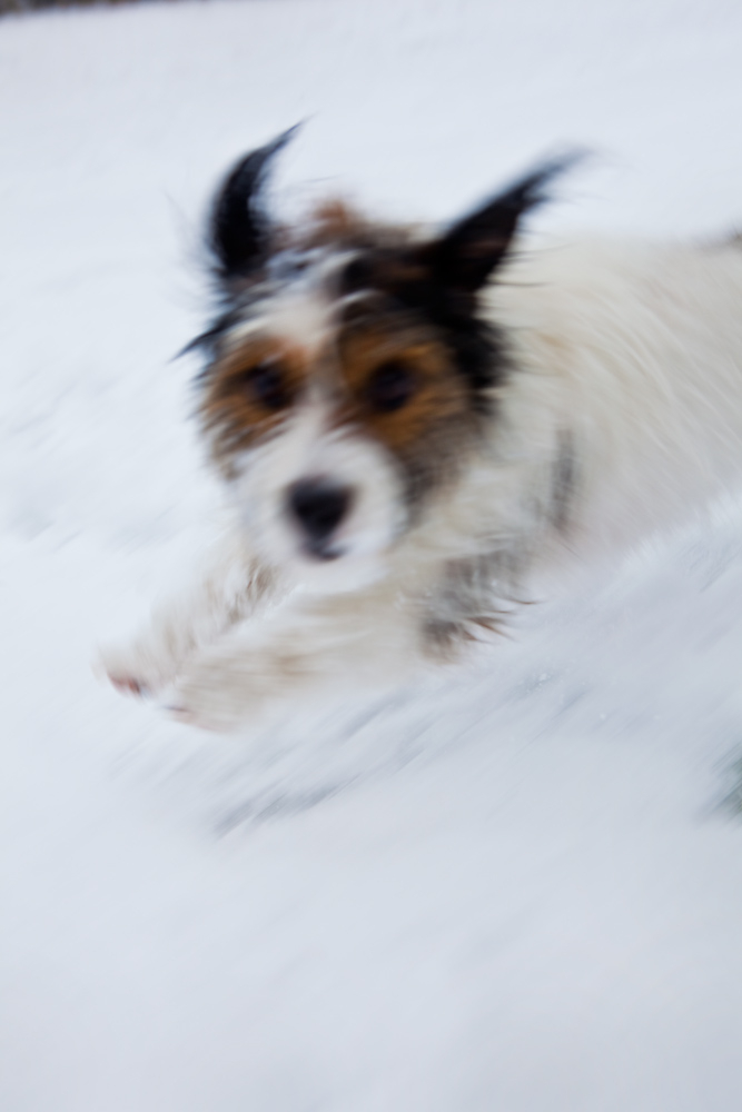 Jezblog Holiday Competition : Crazed Girl Jack Russell : UK